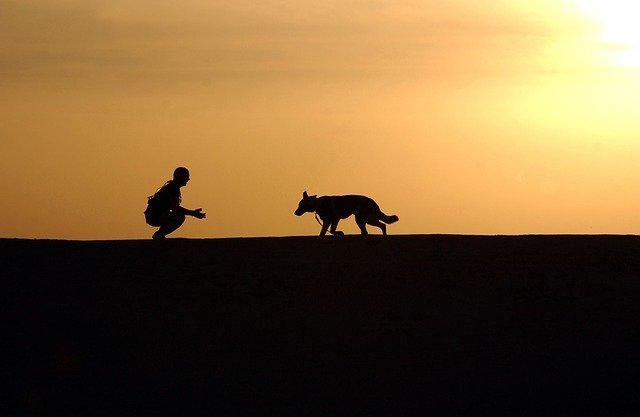 psí výcvik