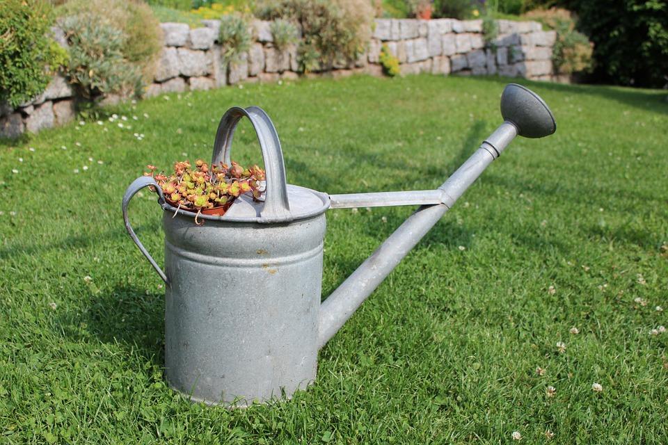trávník na zahradě